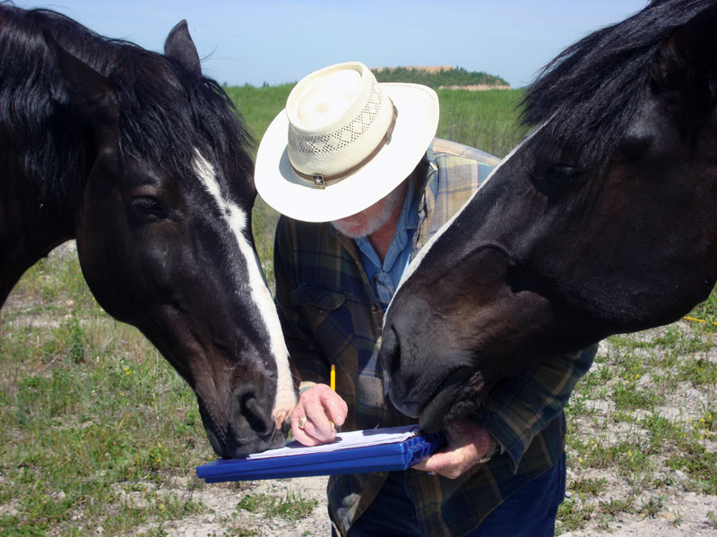 Two horses interested in data collection