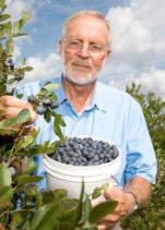 Dr. Spiers - DeSoto blueberries