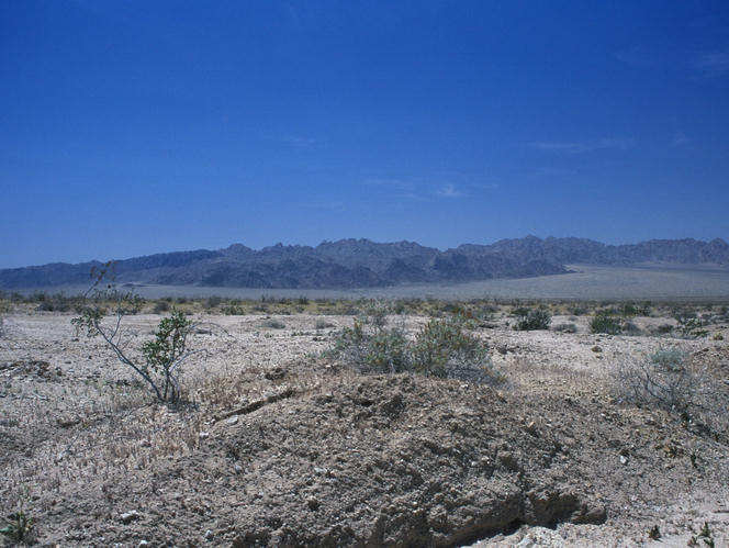 Mojave desert. Photo: John J. Mosesso.