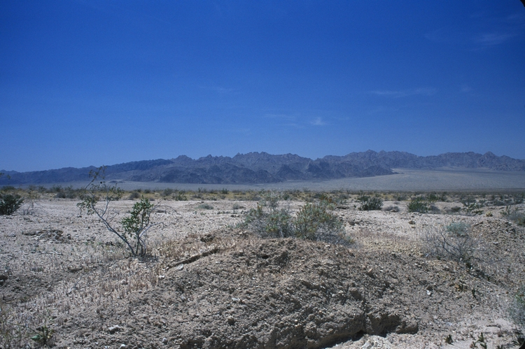 Mojave desert.  Photo by John J. Mosesso.