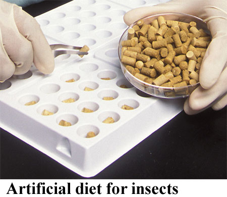 Artificial diet for insects