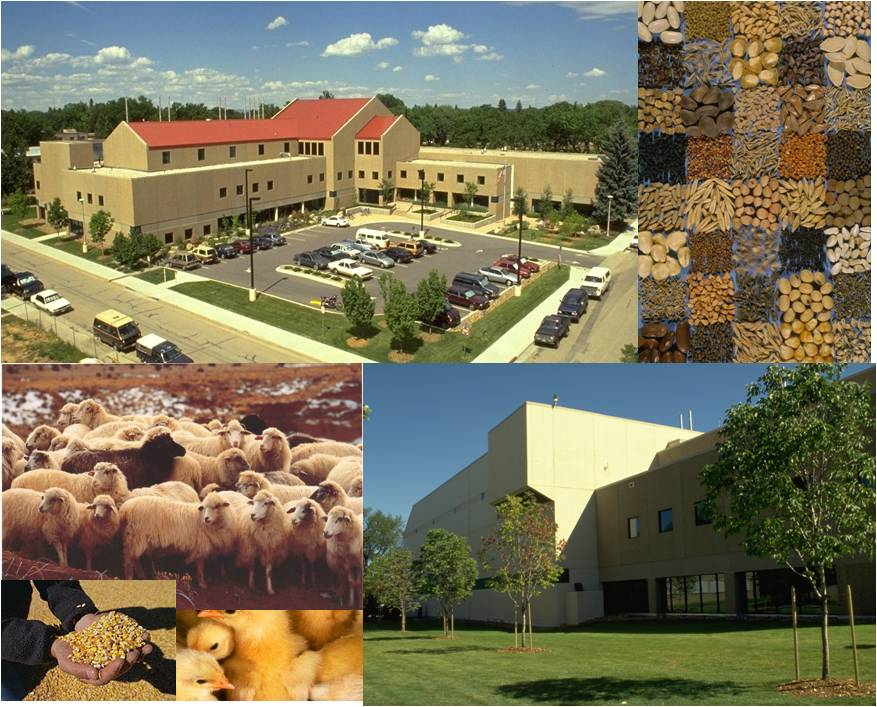 collage of building, animals, seeds