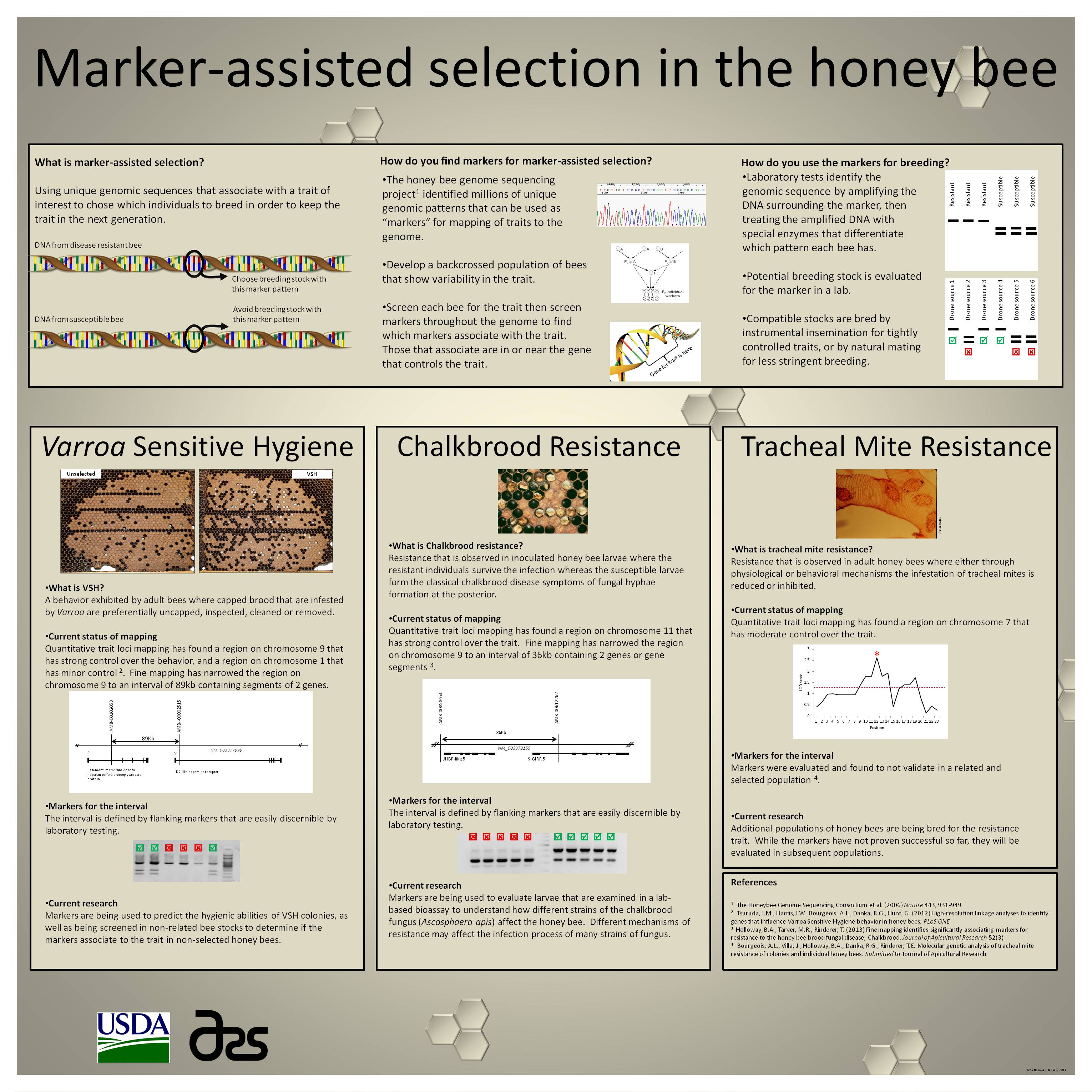 Marker-assisted selection in the honey bee