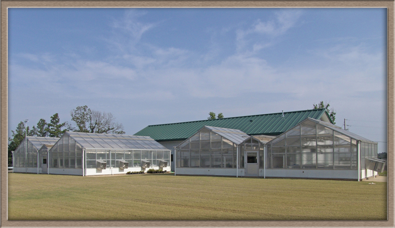 USDA NPURU greenhouse