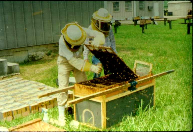 Collecting and mixing bees in bulk package