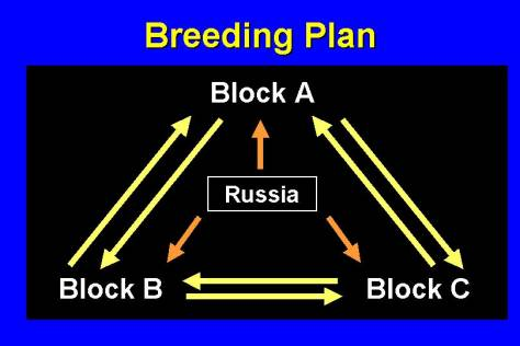 "3-way graph of breeding plan showing different queen ""blocks"""