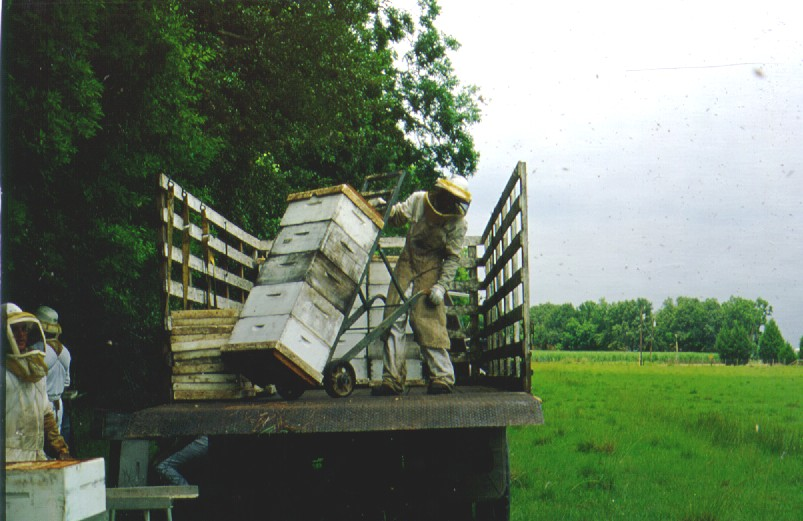 Loading honey from Russian colonies