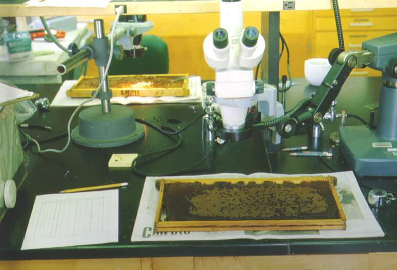 A dissecting microscope used in looking for mites