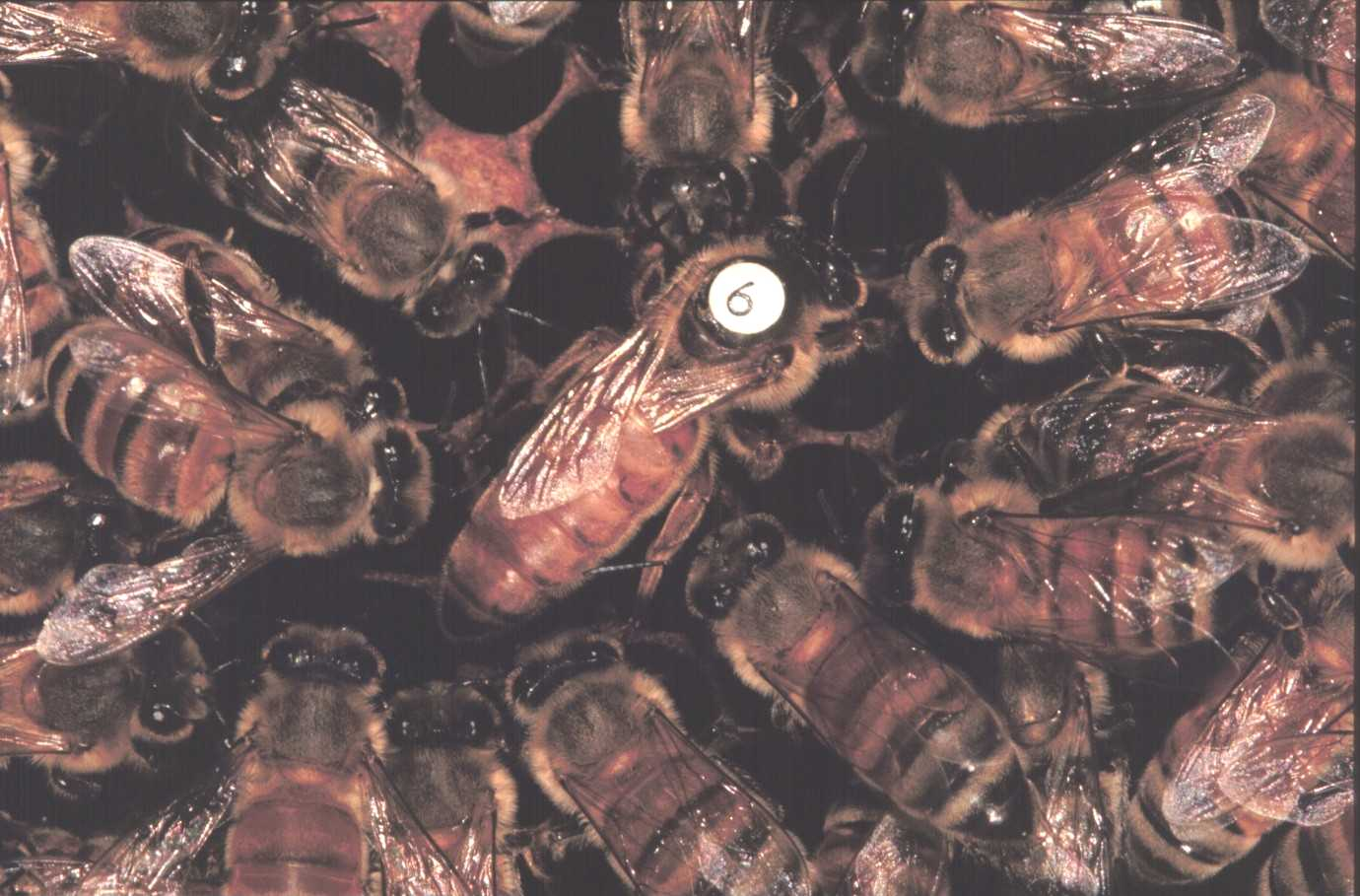 Queen surrounded by attendants