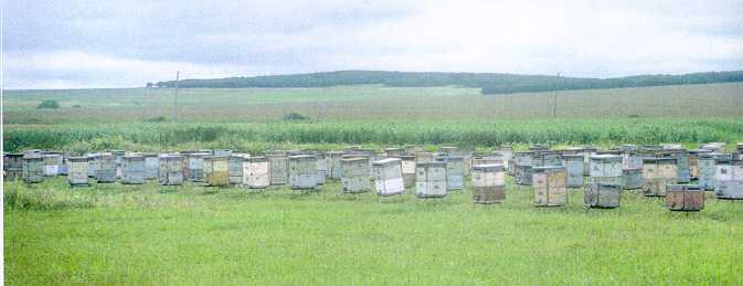 The experimental yard in Khorol, Primorsky, approximately 200 km NW of Valdivostock