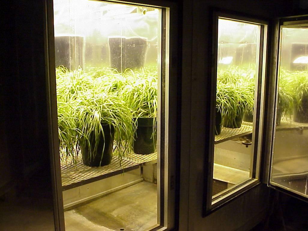 Inside Lamplit Chamber