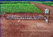 Subsurface drip irrigation controls
