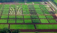 Aerial view of Research Farm