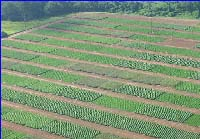 Aerial view showing non-irrigated field