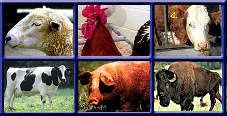 Farm Animal Pictures