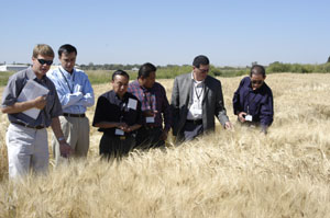 Mexican Mating Barley Trade Team
