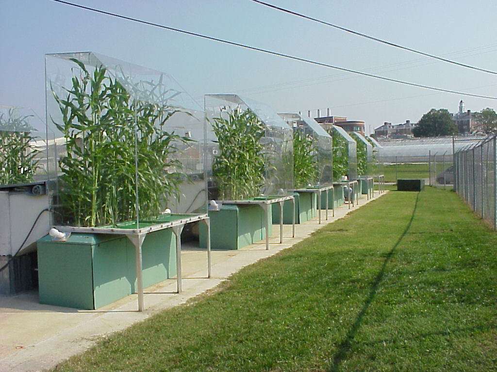 plants growing under a controlled environment