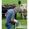 Employee takes record of botanical composition of a pasture