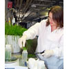 Thumbnail of Laura Cooper collects grass samples to test for fecal coliform