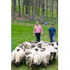 Thumbnail of two employees herding sheep