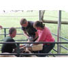 Thumbnail of scientist taking blood sample from sheep