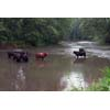 Thumbnail of cattle in stream