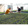 Thumbnail of NRCS staff using greenhouse