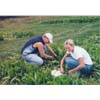 Thumbnail of employees harvesting alternative forage