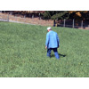Thumbnail of employee walking in field scouting crop