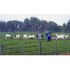 Thumbnail of employees feeding goats
