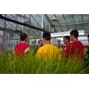 Thumbnail of students listening to talk in greenhouse
