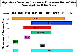 Picture of blast resistant genes