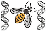 Emblem: Honeybee with DNA