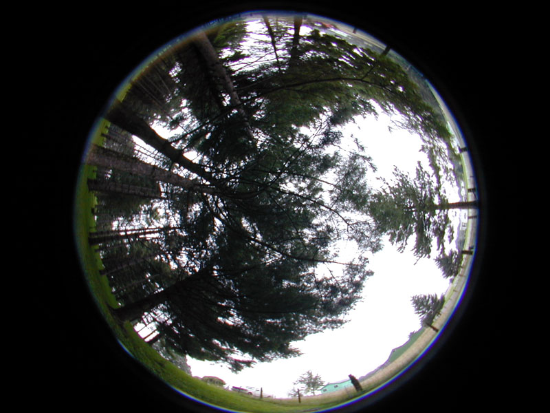 hemispherical images obtained with a camera and a fisheye lens to study tree canopy