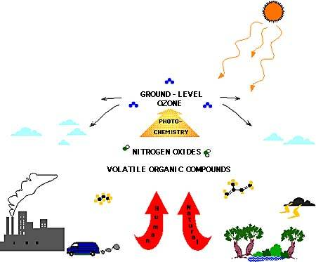 How pollution affects plants essay?