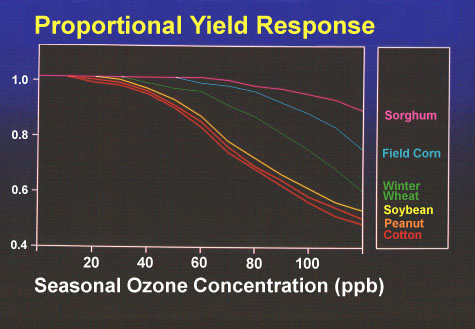 Yield response to seasonal 12 h daily ozone concentration