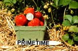 Image of a pint basket full of PrimeTime strawberries