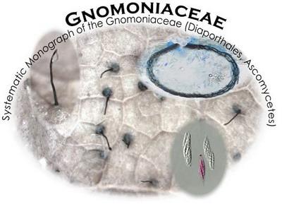 Gnomoniaceae - Systematic Monograph of the Gnomoniaceae (Diaporthales, Ascomycetes)