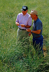 In a cultivated field of bluebunch wheatgrass, geneticists discuss seed yields. Link to photo information.