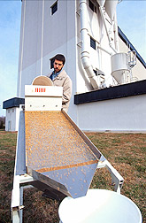 Biological technician uses an inclined sieve to separate insects from a large wheat sample. Link to photo information.