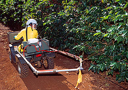 A technician uses an all-terrain vehicle to apply a band of protein bait spray in a coffee field. Link to photo information.