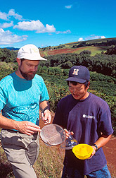 Biologist Grant McQuate and a technician examine the catch from a protein bait trap. Link to photo information.