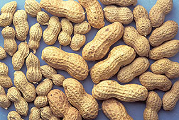 Photo: Peanuts. Link to photo information