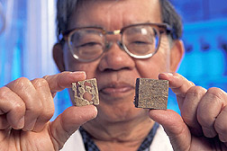Chemist displays two board samples exposed to termites: Click here for full photo caption.