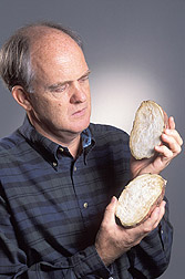 Entomologist examines white-fleshed sweetpotatoes: Click here for full photo caption.
