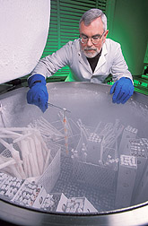 Microbiologist and insect mycologist checks for a fungal isolate in nitrogen tank: Click here for full photo caption.