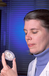 Technician examines a freeze-dried culture: Click here for full photo caption.