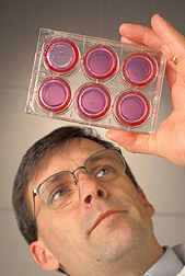 Physiologist holds the so-called artificial gut: Click here for full photo caption.