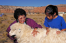 Woman and child petting a Navajo-Churro sheep: Click here for full photo caption.