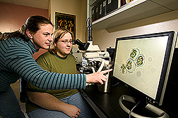 Plant physiologist and technician examine changes in cell structure during cryoprotection: Click here for full photo caption.